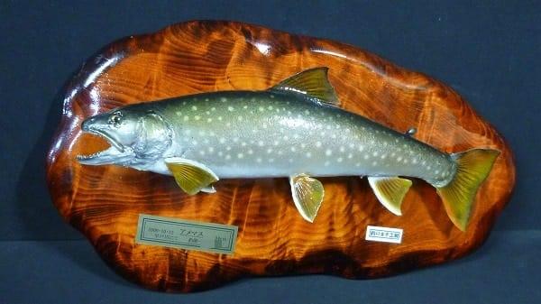 魚 剥製 アメマス 34cm / 釣りキチ工房 飾り物_1