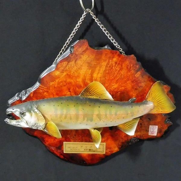 剥製 アマゴ 32cm 木製飾り板付 / 早戸川国際マス釣場_1