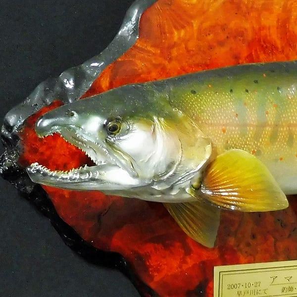 剥製 アマゴ 32cm 木製飾り板付 / 早戸川国際マス釣場_2