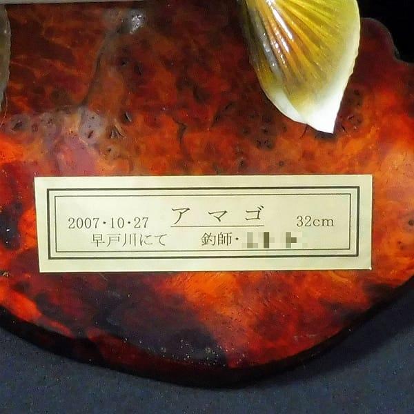 剥製 アマゴ 32cm 木製飾り板付 / 早戸川国際マス釣場_3