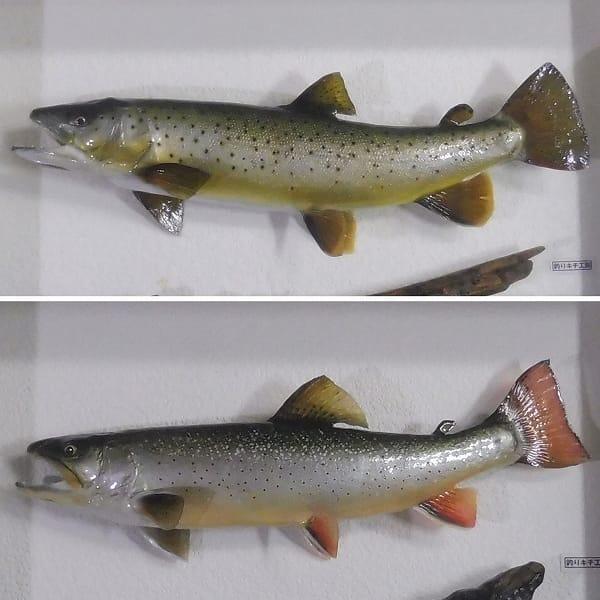 剥製 ブラウントラウト 40cm ジャガー トラウト 35cm 魚_2