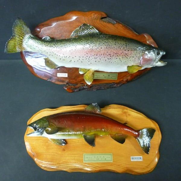 魚の剥製 ニジマス 50cm ヒメマス 37cm / 鱒 飾り物
