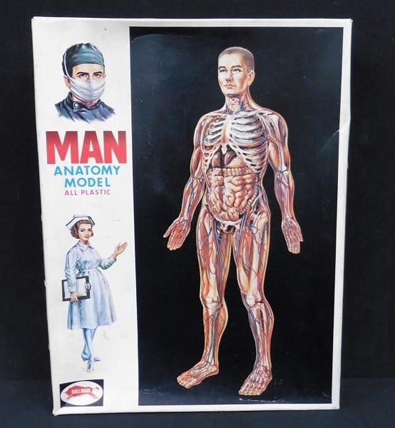ブルマァク 人体模型 男性  プラスチック製 /  プラモデル