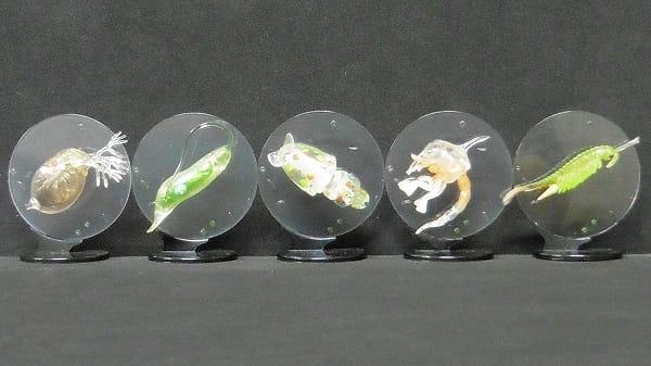 海洋堂 カプセルQ ミクロコスモス プランクトン大全 5種