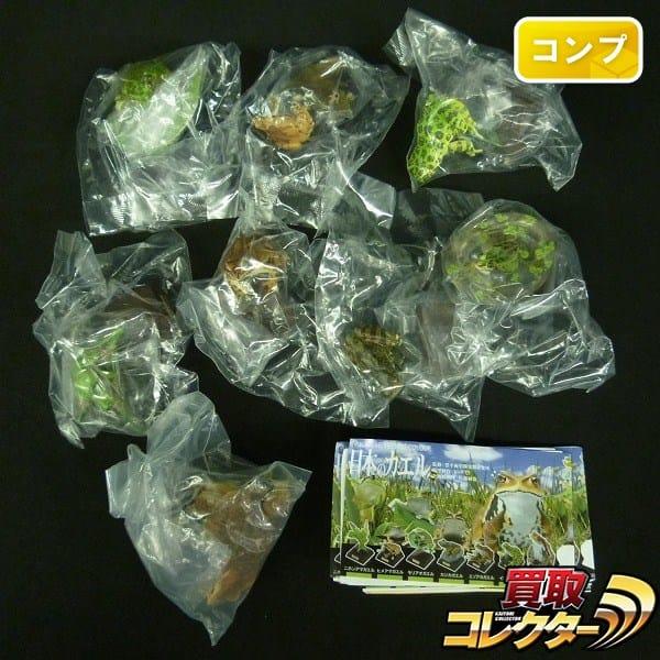 ネイチャーテクニカラー 日本のカエル 全8種 カジカガエル 他