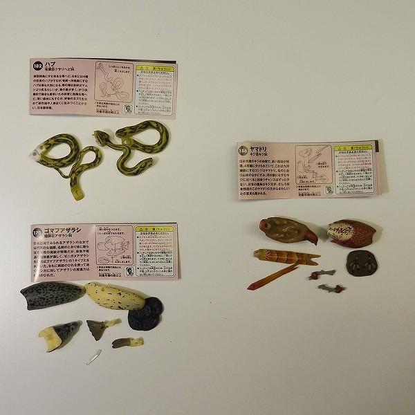 海洋堂 チョコQ 日本の動物 第7弾 ノーマル 全23種 + シークレット 1種_3